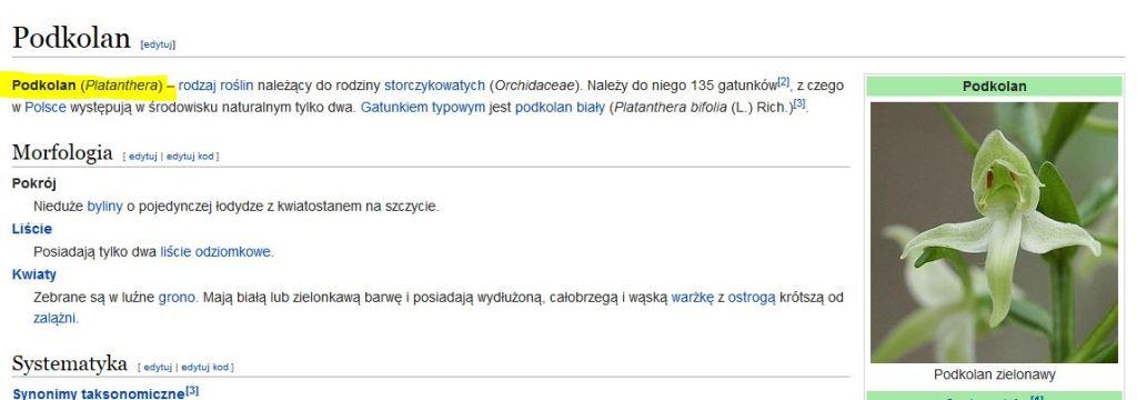 andrzej_podkolan