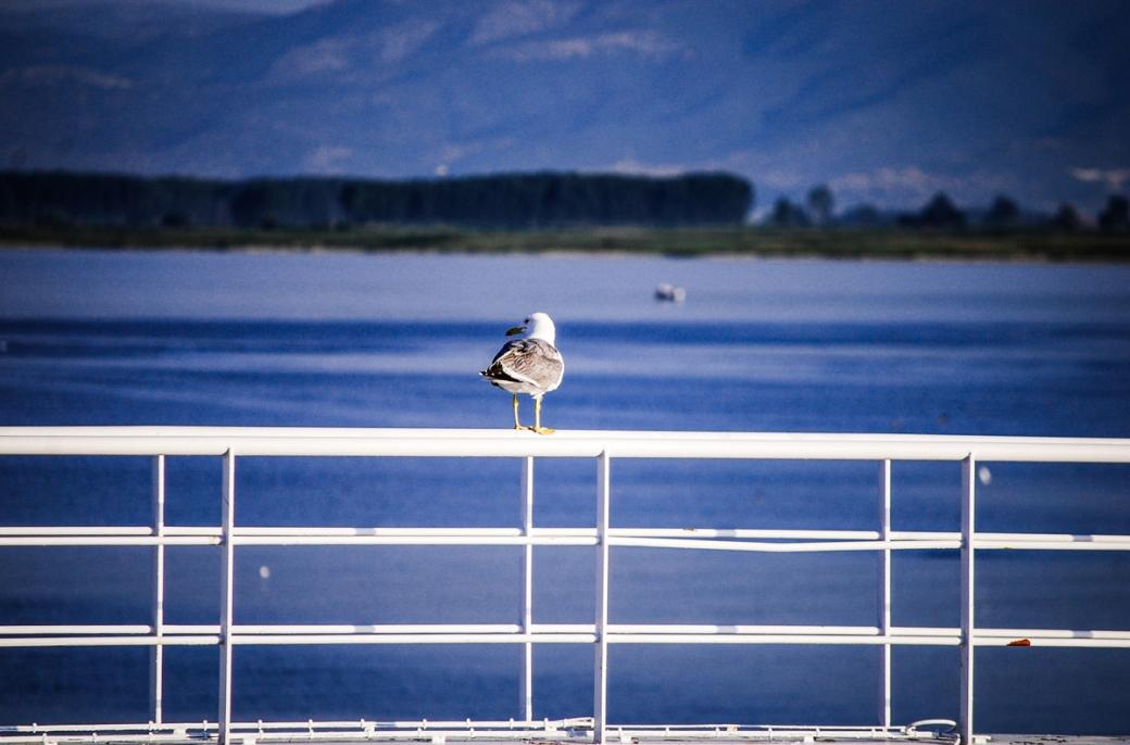 Photoétudes gulls 01