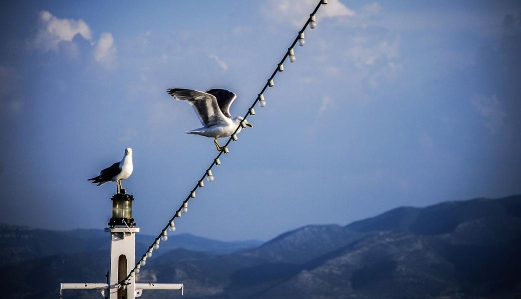 Photoétudes gulls 02
