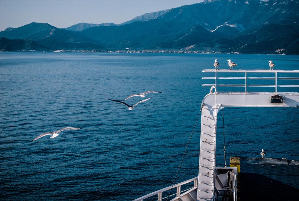 Photoétudes gulls 03