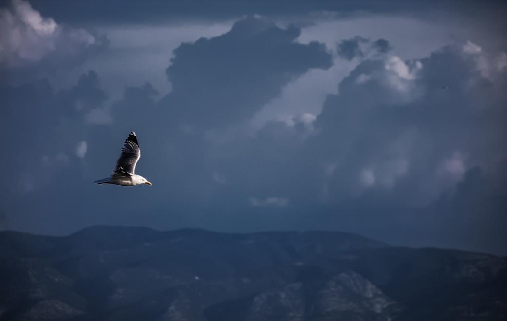 Photoétudes gulls 04