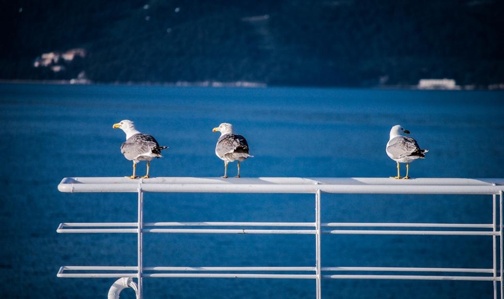 Photoétudes gulls 05